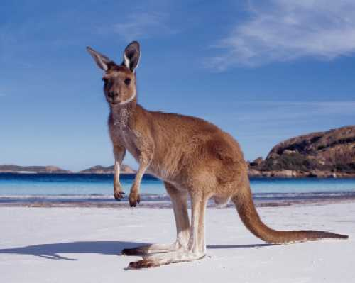 <font size=-5>©  Tourism Australia</font>